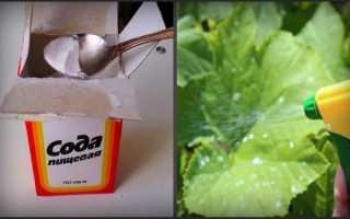 Как подкормить огурцы содой?
