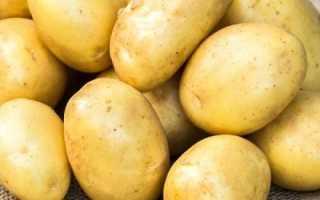 Картофель Банба — описание сорта, фото, отзывы, посадка и уход