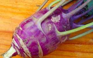 Как растет капуста кольраби?