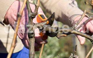 Почему у винограда рекомендуется обрезать боковые побеги?