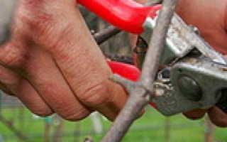 Обрезка винограда осенью для начинающих