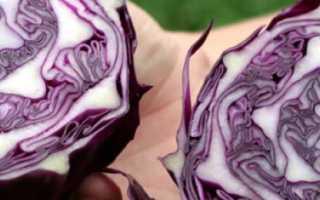 Лучшие сорта краснокочанной капусты