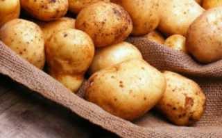 Сорта картофеля для Сибири и описание