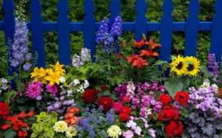 Скидка цветов – фотографии с именами, каталог многоэтажных и однолетних цветов