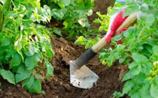 Почему урожайность картофеля возрастает после окучивания?