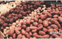 Сорта картофеля для Волгоградской области