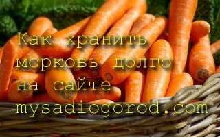 Как подготовить к хранению морковь?