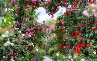 Сад – мое лекарство: три удивительные истории о том, как сад придает силы и помогает нам