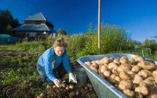 Нужно ли пахать землю осенью под картофель?