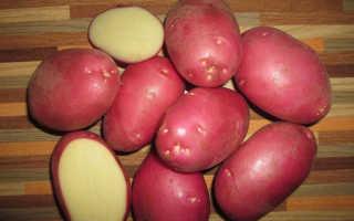 Картофель Рокко — описание сорта, фото, отзывы, посадка и уход